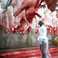 "Photo of a slaughterhouse referenced in Charlie LeDuff's article titled, ""At a Slaughterhouse, Some Things Never Die."""